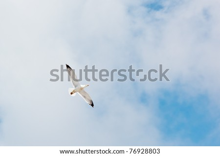 An image of a seagull in the sky - stock photo
