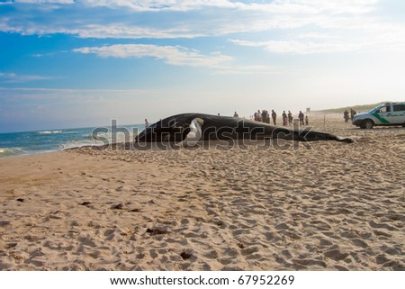 An image of a whale washed ashore - stock photo