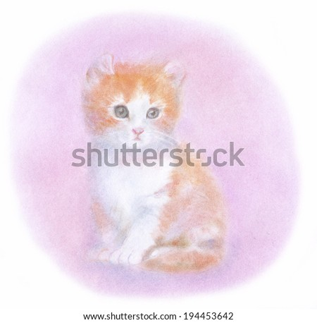 An image of American curl kitten