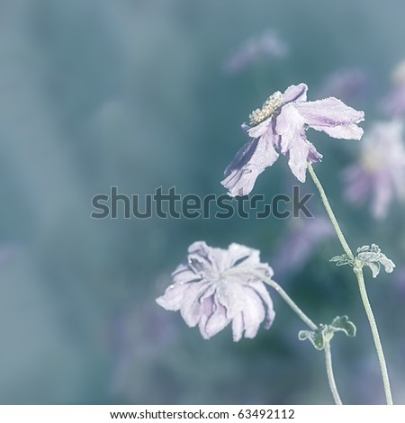 An image of an autumn icy flower - stock photo