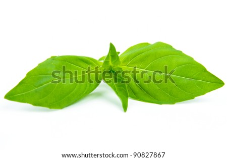 An image of basil leafs on white background - stock photo