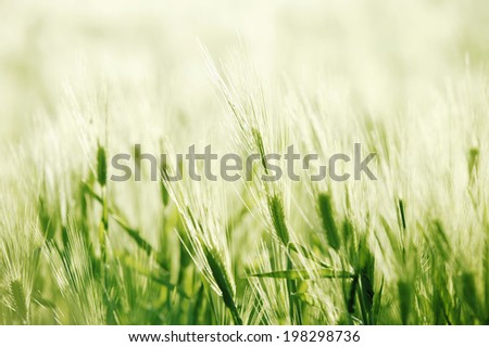 An Image of Blue Barley