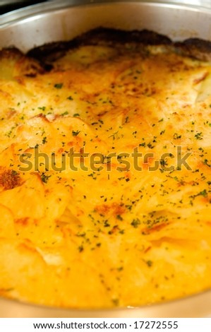 An image of cheesy potatoes au gratin - stock photo