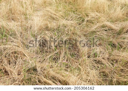 An Image of Dry Weeds - stock photo