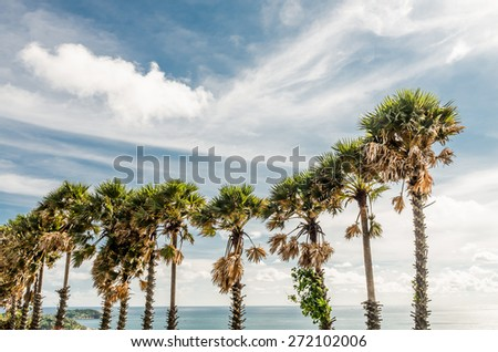 An image of few nice palm trees in the blue sunny sky - stock photo