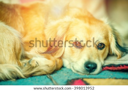 An image of funny dog portrait  - stock photo