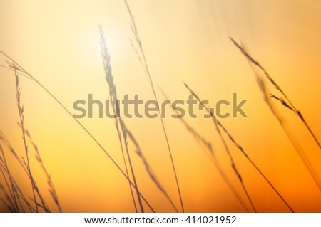 An image of grass silhouette at sunset - stock photo