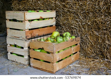 An image of green apples in boxes - stock photo