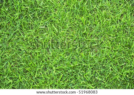 An image of green grass as a background