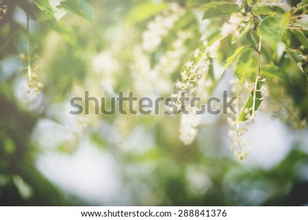 an image of green leaf background - stock photo