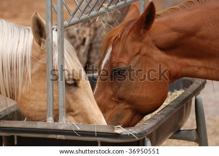An image of horses feeding at the trough - stock photo