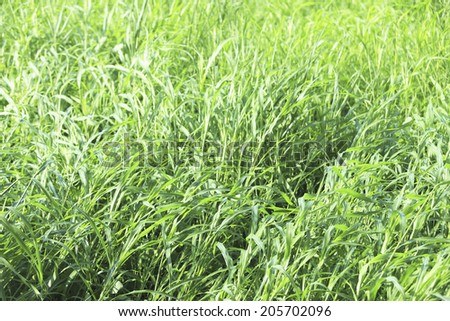 An Image of Lawn