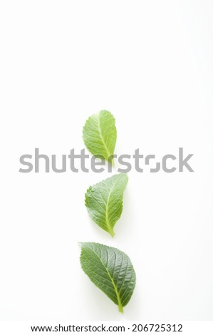 An Image of Leaves