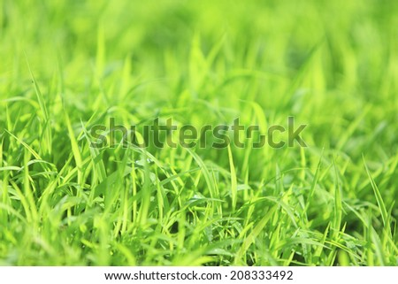 An Image of Little Grass