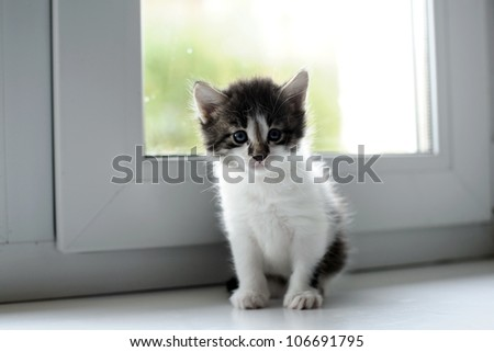 An image of little kitten sitting on a window