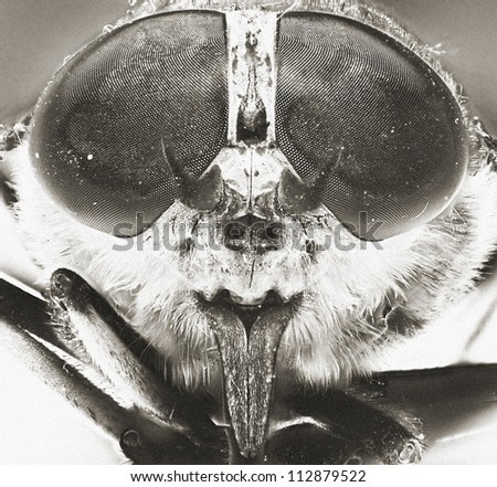 An image of macro of a bug - stock photo