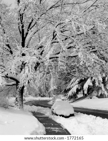 An image of Northshore Drive in Reston Virgina after a heavy snow fall.   Snow laden branches of a large tree loom over the street below. - stock photo