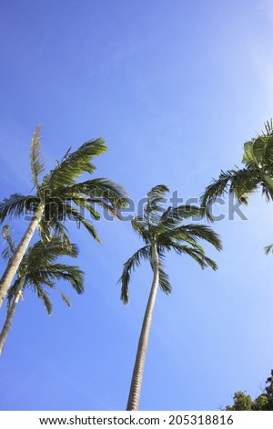 An Image of Palm Tree