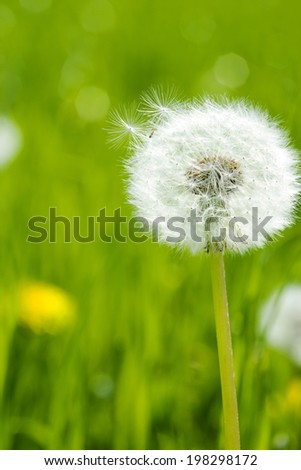 An Image of Puffball