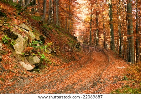 An image of road in yellow autumn forest