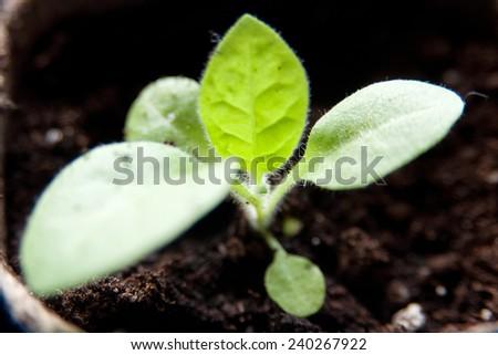 An image of seedlings in flowerpots - stock photo