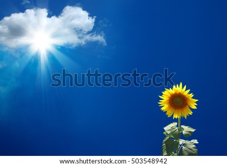 an image of sunflower and sunbeams