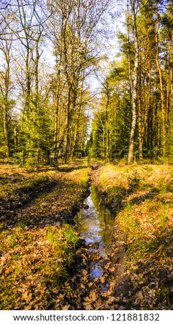 An image of terrain road in forest - stock photo