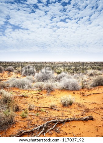 An image of the dry australian outback - stock photo