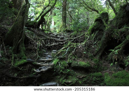 An Image of Virgin Forest - stock photo