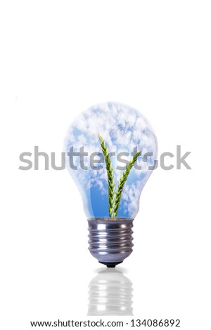 An image of wheat plant inside lightbulb - stock photo