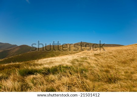 An image of yellow grass in the mountains