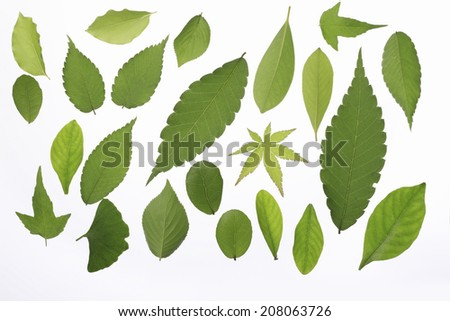 An Image of Young Leaves Material