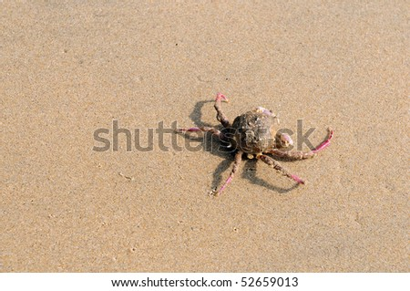 An injured crab at a local beach