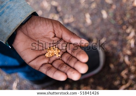 An inner-city African-American child holds pepper plant seeds in her hand.