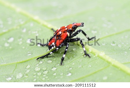 An insect isolated close-up on green leaves   - stock photo