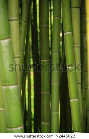 An intricate forest of green canes of bamboo