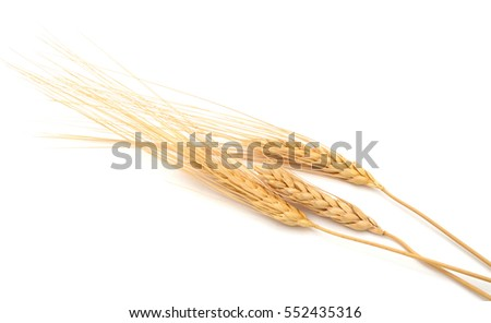 An isolated grain wheat