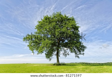 an isolated tree in a green meadow