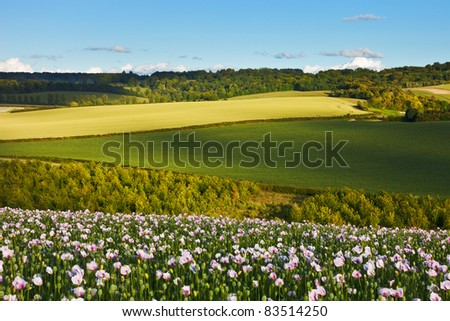 An iyllic summer landscape view over the Chilterns, England, with dappled light and a field of opium poppies.