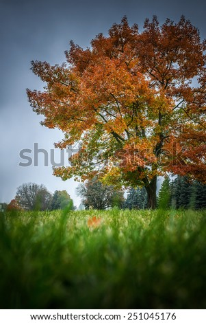 An oak is a tree or shrub in genus Quercus of beech family, Fagaceae, having approximately 600 extant species. - stock photo