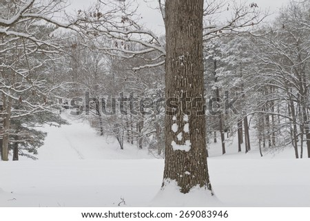 An oak tree with a happy face made out of snow stands in front of a tree lined hill covered in fresh winter snow - stock photo