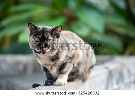 An Old cat with nature place . - stock photo