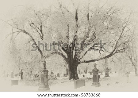 An old cemetery in winter with a large tree covered with ice and snow.