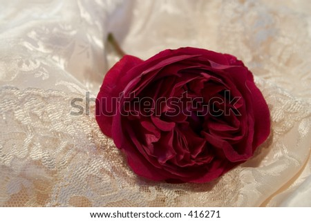 An old fashioned full blown red rose discarded on satin and old lace - stock photo