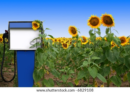 an old gas tank in a field of sunflowers - stock photo
