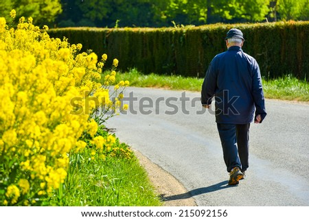 An old man walking along the road with bright yellow field flowers to his left side - stock photo