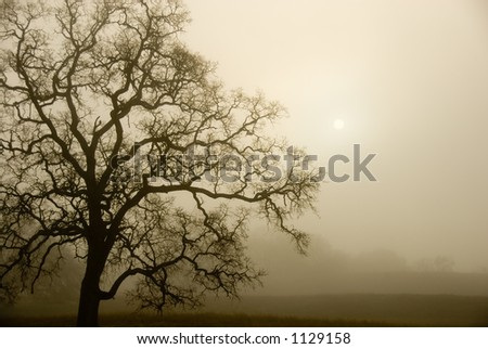 An old oak tree forms a silhouette on a foggy, misty morning.
