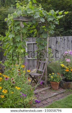 An old,  weathered arbor draped with ornamental grapes hovers over a matching chair, hidden behind a colorful group of black-eyed Susans and purple cone flowers. - stock photo