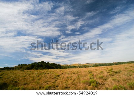 An open grassy plain in south africa with blue skies and soft white clouds - stock photo