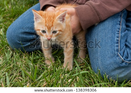 An orange and white kitten with gray eyes is held captive in a child's hands with its feet in the grass. - stock photo